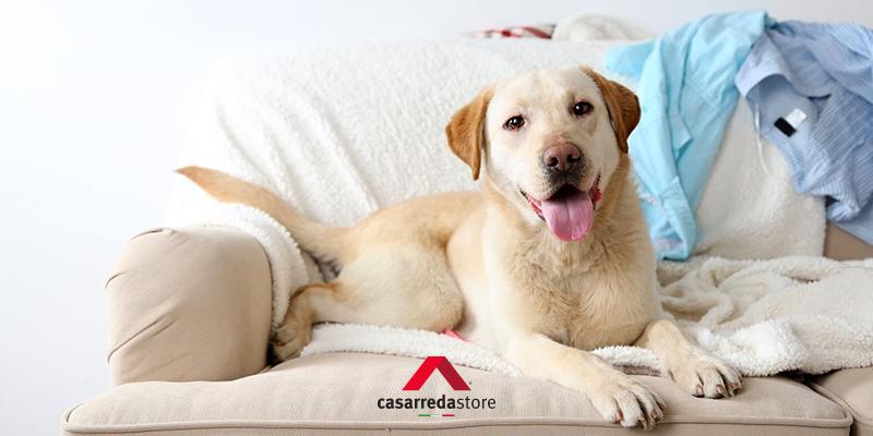 Proteggere i mobili dagli animali domestici: trucchi e consigli