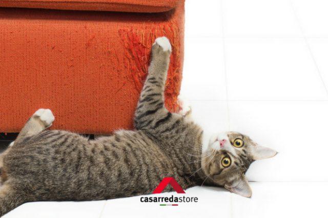 6 disastri che il gatto fa in casa: teneri ma catastrofici